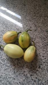 Garden Egg unverarbeitet